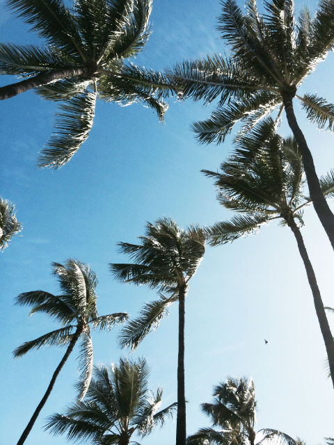 アラモアナビーチパーク 散歩