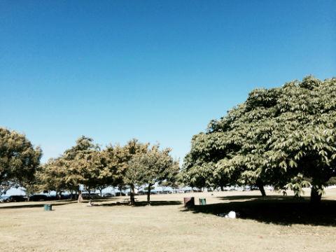 アラモアナビーチパーク 散歩コース
