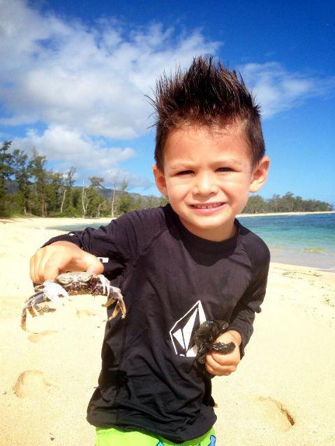 モクレイアビーチ 生き物
