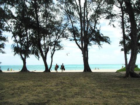 ワイマナロビーチ 木陰